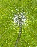 Baum- und Blattkabinendach Stockfotos