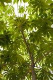 Baum- und Blattkabinendach Stockbild