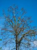 Baum und blauer Himmel Lizenzfreie Stockfotografie