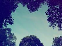 Baum und blauer Himmel Stockfoto
