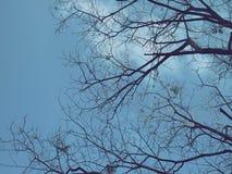 Baum und blauer Himmel Stockbilder