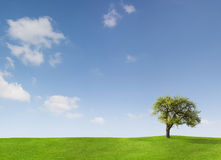 Baum und blauer Himmel Stockfotografie