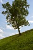Baum und blauer Himmel Lizenzfreies Stockfoto