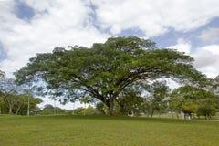 Baum und blauer Himmel Stockbild