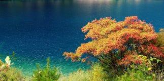 Baum und blaues Wasser stockbild