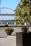 Baum und Blumenbeet vor dem hintergrund des Dnieper-Flusses und die Brücke über dem Fluss lizenzfreies stockfoto