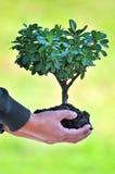 Baum und Boden in den Händen des Mannes Stockfotografie