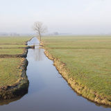 Baum und Brücke in der Wiese gestalten in den Niederlanden nahe Meer landschaftlich Stockbilder