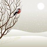 Baum und Bullfinch Stockfotografie