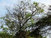 Baum und der blaue Himmel stockfotografie
