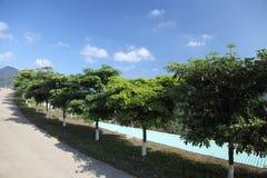 Baum und der Himmel Stockbilder