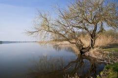 Baum und der See Stockbild