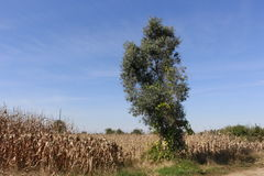 Baum und die Landschaft Lizenzfreies Stockfoto