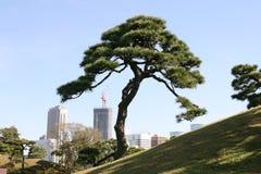 Baum und die Stadt Stockfotografie