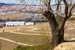 Baum und die Stadt lizenzfreie stockbilder