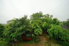 Baum- und Dorfhäuser Stockfoto