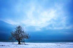 Baum und drastischer Himmel Stockfotos