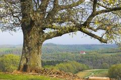 Baum und ein Bauernhof Stockbilder