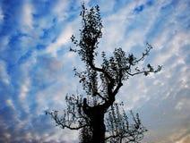 Baum und ein Wolkenhimmel stockfotografie