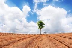 Baum und Fahrrad auf dem gepflogenen Gebiet Lizenzfreie Stockfotografie