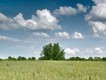 Baum und Feld stockfotografie