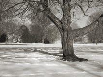 Baum und Feld BW Stockfoto