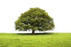 Baum und Feld getrennt auf Weiß stockfoto