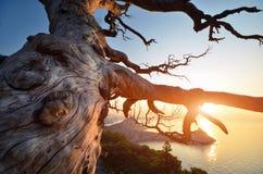 Baum und Felsen Lizenzfreies Stockbild