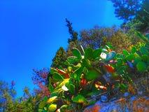 Baum und Felsen Stockfoto