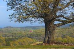 Baum und Fernbauernhof stockfoto