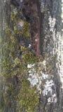 Baum und Flechte lizenzfreie stockfotos