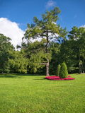 Baum und flowersin das parj Lizenzfreies Stockfoto