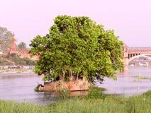 Baum und Fluss Stockfoto