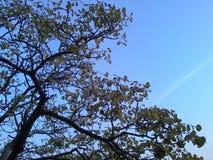 Baum und freier Himmel Stockfotos