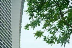 Baum und Gebäude Stockbild