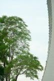 Baum und Gebäude Stockfotografie