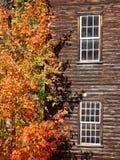 Baum und Gebäude Lizenzfreie Stockbilder