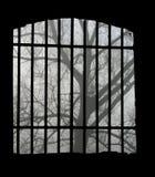 Baum und Gitter Stockbilder