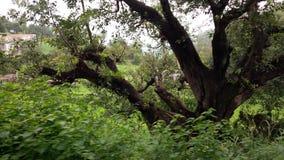 Baum und Grün Stockfotos