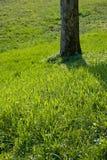 Baum und Gras Stockfoto