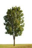Baum und Gras lizenzfreie stockfotografie