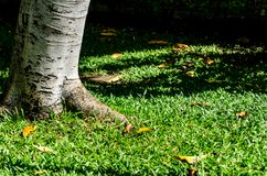Baum- und Grashintergrund im Mittag Stockfotos