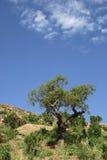Baum und Himmel Stockfoto