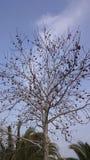 Baum und Himmel Stockfotos