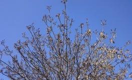 Baum und Himmel Lizenzfreie Stockfotos