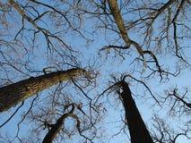Baum und Himmel stockbild