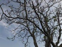 Baum und Himmel Lizenzfreie Stockbilder