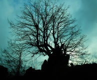 Baum und Himmel Lizenzfreies Stockbild