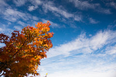 Baum und Himmel im Herbst Lizenzfreies Stockfoto