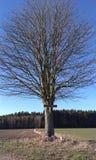 Baum und Kruzifix Stockfotografie